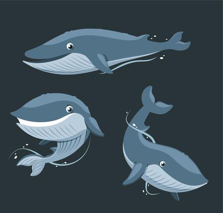 ballena azul: Blue Whale Mam�fero acu�tico establecidos, ilustraci�n vectorial de dibujos animados. Vectores