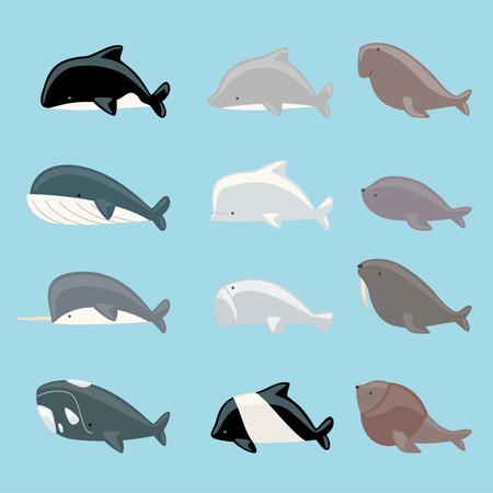 ballena: Marina colección mamíferos icono, con ballenas, delfines, manatíes, beluga, ballena asesina, narval, morsa, león marino, ballena azul ilustración vectorial. Vectores