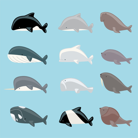 Marine mammals icon collection, with whale, dolphin, manatee, beluga, killer whale, narwhal, walrus, sea lion, blue whale vector illustration.