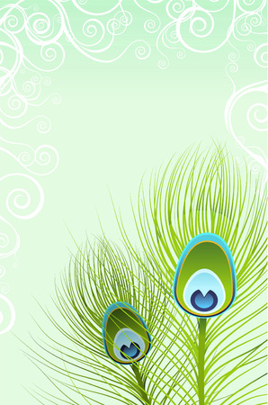 Feather close up design vector illustration.