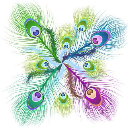 falling feather: Feather Patterns vector illustration. Illustration