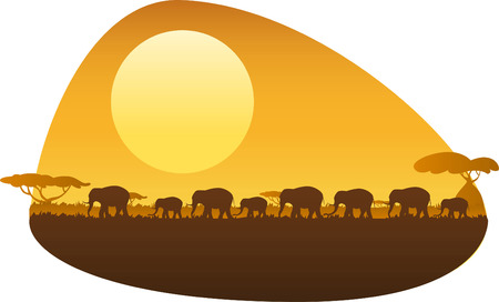 'wildlife reserve': Group of elephants walking in an african sunset.