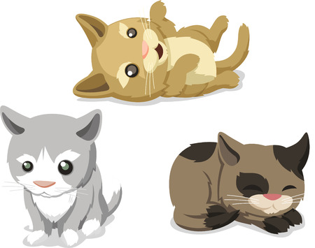 Cute Cat kitten Pet, vector illustration cartoon.