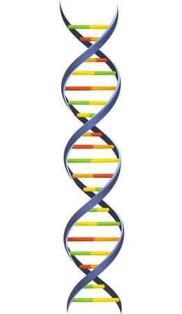 DNA Blood Chromosomenkette Helixmodell Wissenschaft molekulare Wendelstruktur Vektor-Illustration.