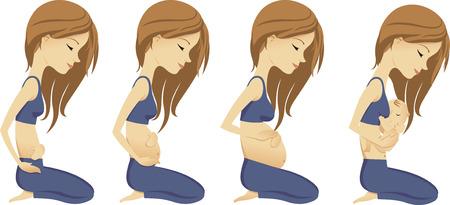 Pregnancy growth progress illustrative steps vector cartoon illustrations