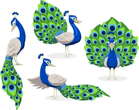 Peacock standing peafowl green and blue feathers, illustration cartoon.