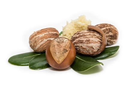 Shea nuts on leaves. Vitellaria Paradoxa