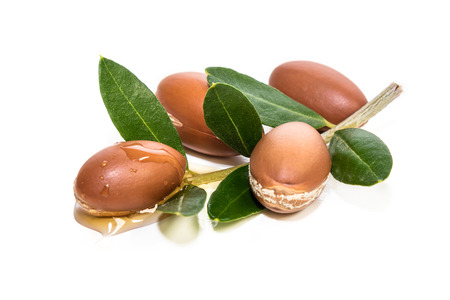 Argan branch Stock Photo