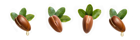 Argan nuts isolated for use in designs Zdjęcie Seryjne