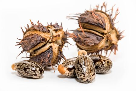 Ricinus oil and seeds on white background Фото со стока