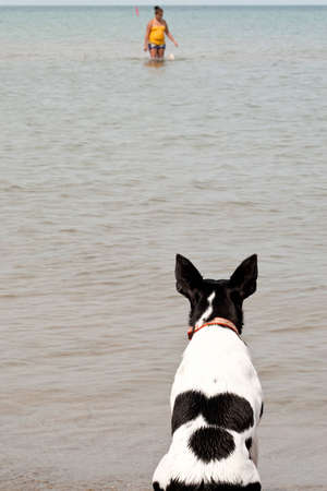 Dog Watching Owner at Beach photo