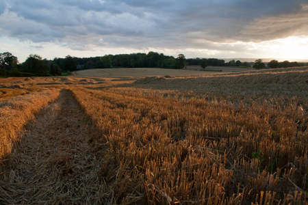 south west england: England Countryside View Over Wheat Fields