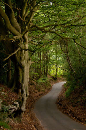 rural community: English Wooded Country Lane