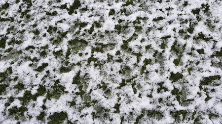 The snow lies on the green grass and slowly melts.