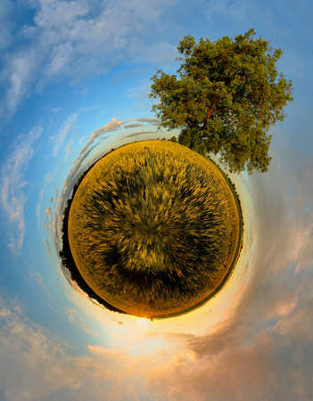 Planet with tree at sunset - 360 degree panorama photo