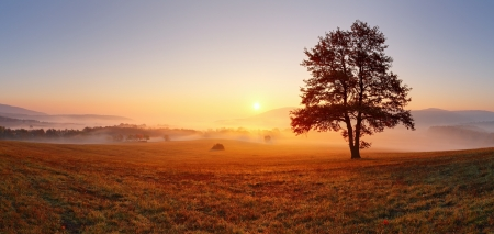 panoramic: Alone tree on meadow at sunset with sun and mist - panorama Stock Photo