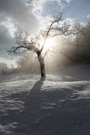 Rays and tree Stock Photo - 16218088