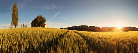 church: Sunset over wheat field with path and chapel in Slovakia - panorama