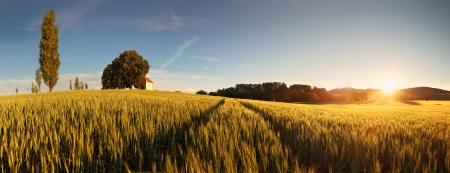slovakia: Tramonto sopra il campo di grano con il percorso e la cappella in Slovacchia - panorama