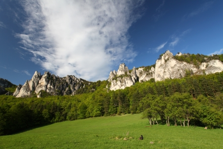 ravine: Summer in mountains, rock, green bush, trees and a grass Stock Photo