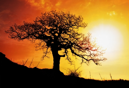 oak trees:  tree with sun and  red orange yellow sky
