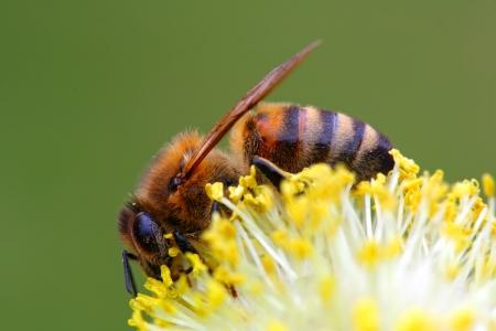 Biene auf gelben Planeten