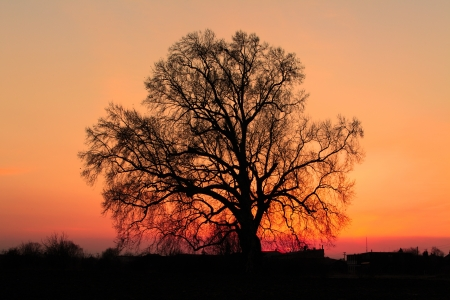 Alone tree on meadow at sunset with sun Stock Photo - 16590654