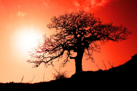 Alone tree with sun and color red orange yellow sky photo