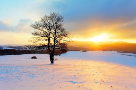 january sunrise: Winter landscape in snow nature with sun and tree