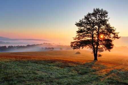 Alone tree on meadow at sunset with sun and mist Stock Photo