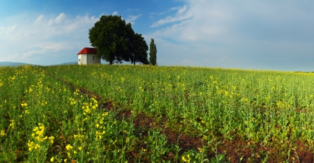 Spring Meadow with blue sky and clouds and yellow flower Stock Photo - 17768162