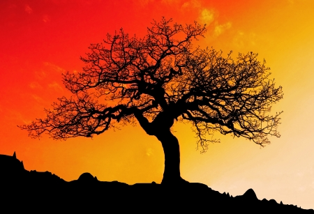 australia landscape: Alone tree with sun and color red orange yellow sky