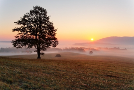 meadow: Alone tree on meadow at sunset with sun and mist - panorama Stock Photo