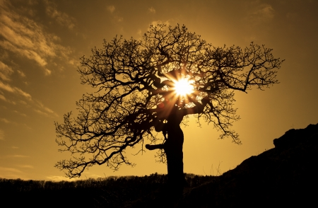 africa tree: Alone tree with sun and color  sky