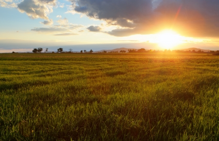 Green wheat field at sunset with sun Stock Photo