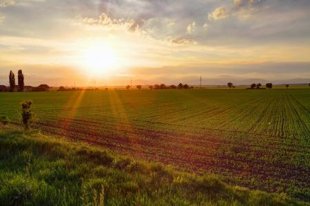 Gree field at sunset Stock Photo