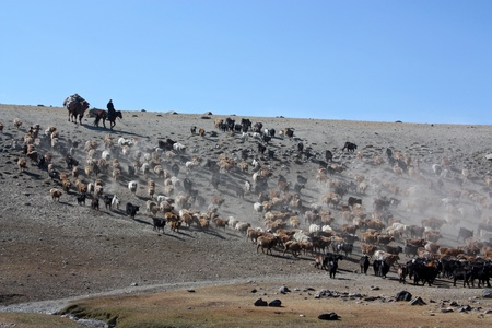 rural community: Mongolia country