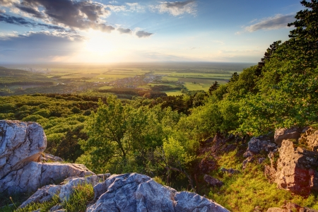 Green forest at sunset - Slovakia