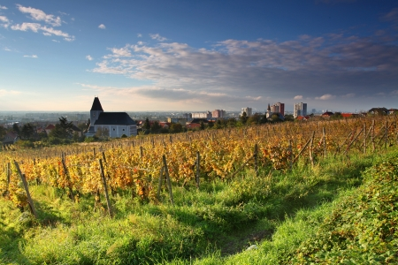 haut: Rows of vines to sunrise with church in background