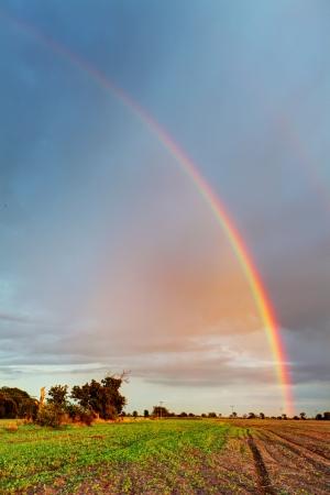 Rainbow on field - vertical photo photo