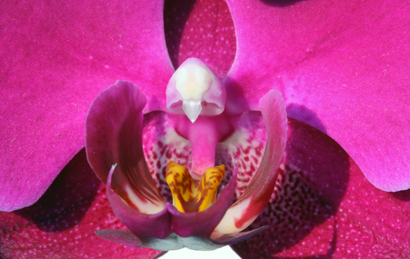 Pink orchid photo