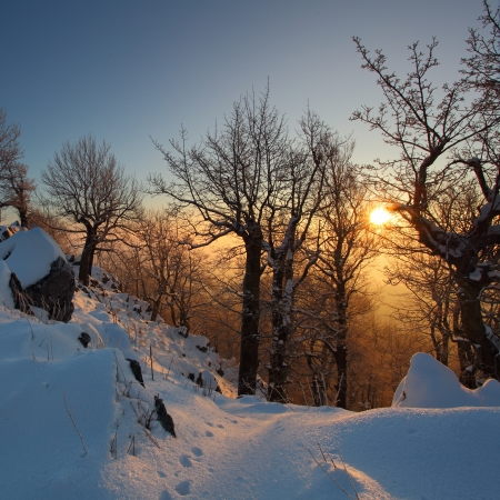 christmas morning: Beautiful winter sunset with trees in the snow Stock Photo