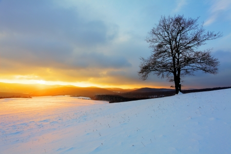 Alone tree on meadow at sunset at winter photo