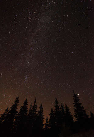 Silhouette of trees against night sky with stars photo