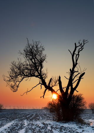 Winter alone tree on field photo
