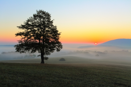 Tree on meadow at sunrise with sun photo