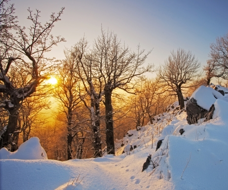 january sunrise: Winter in  forest at sunset Stock Photo