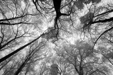 forrest: Sky sunshine through the winter tree branches (from below).