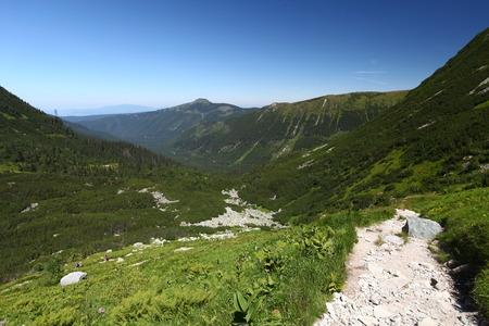 scrub grass: West Tatras