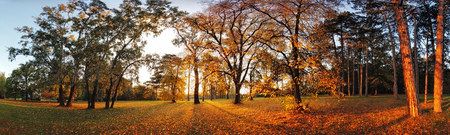 Autumn panorama in park with a sun photo